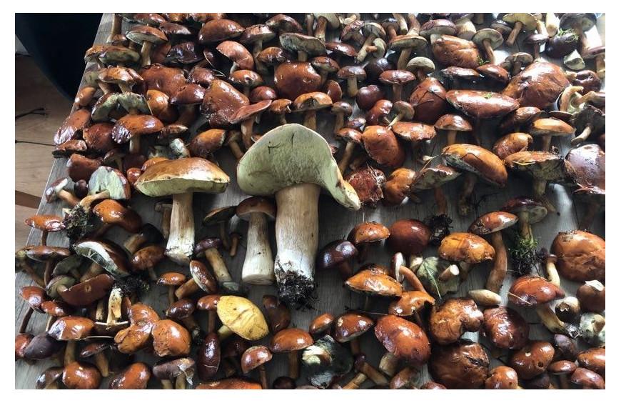 Sezon grzybowy tuż tuż...Jaka suszarka do grzybów będzie najlepsza? Podpowiadamy